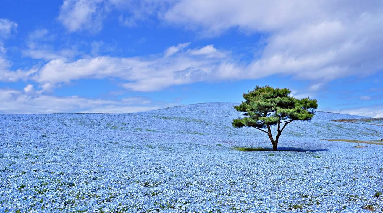 國營常陸海濱公園,茨城一日遊,茨城觀光,東京周邊遊,東京前往茨城