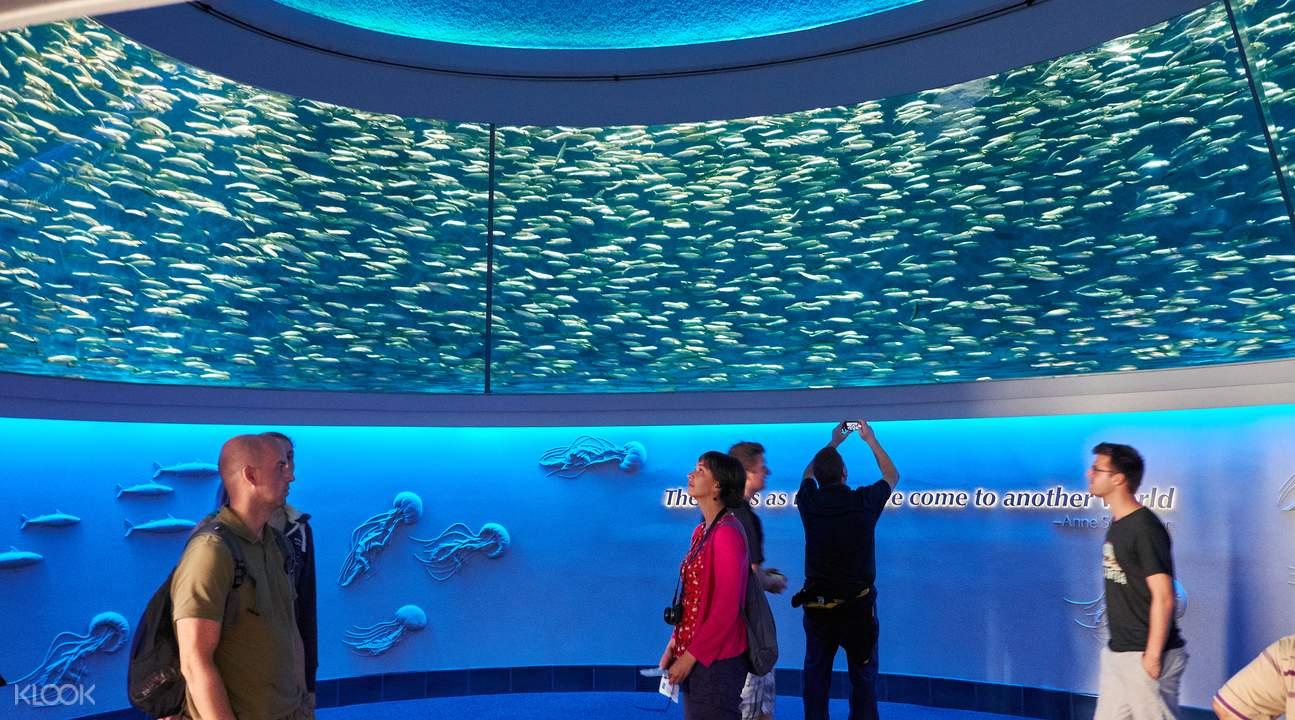 蒙特雷灣水族館一日門票