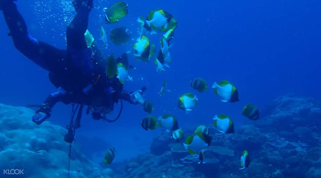 discover diving in green island