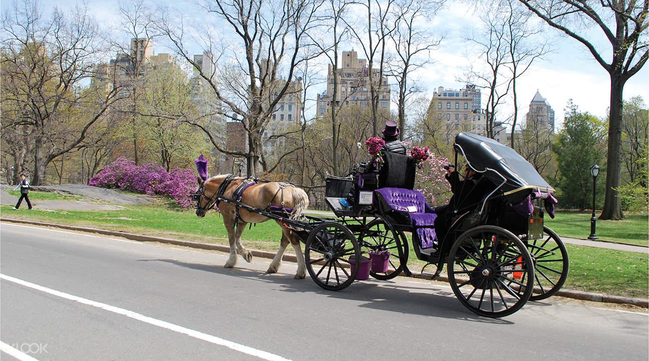 中央公園馬車體驗