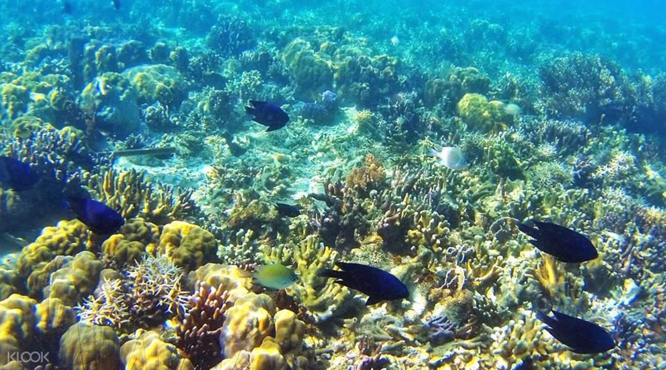 科倫lusong珊瑚花園