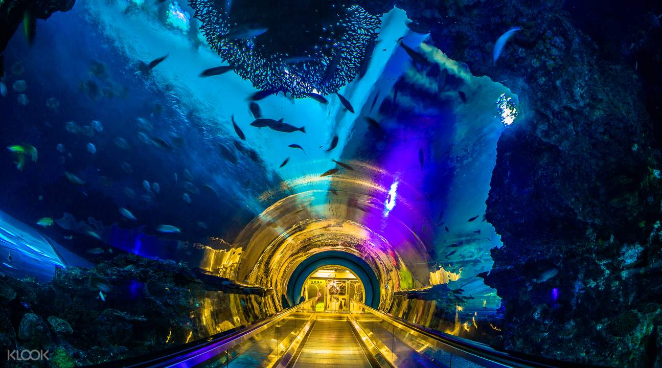 national museum of marine biology and aquarium kenting