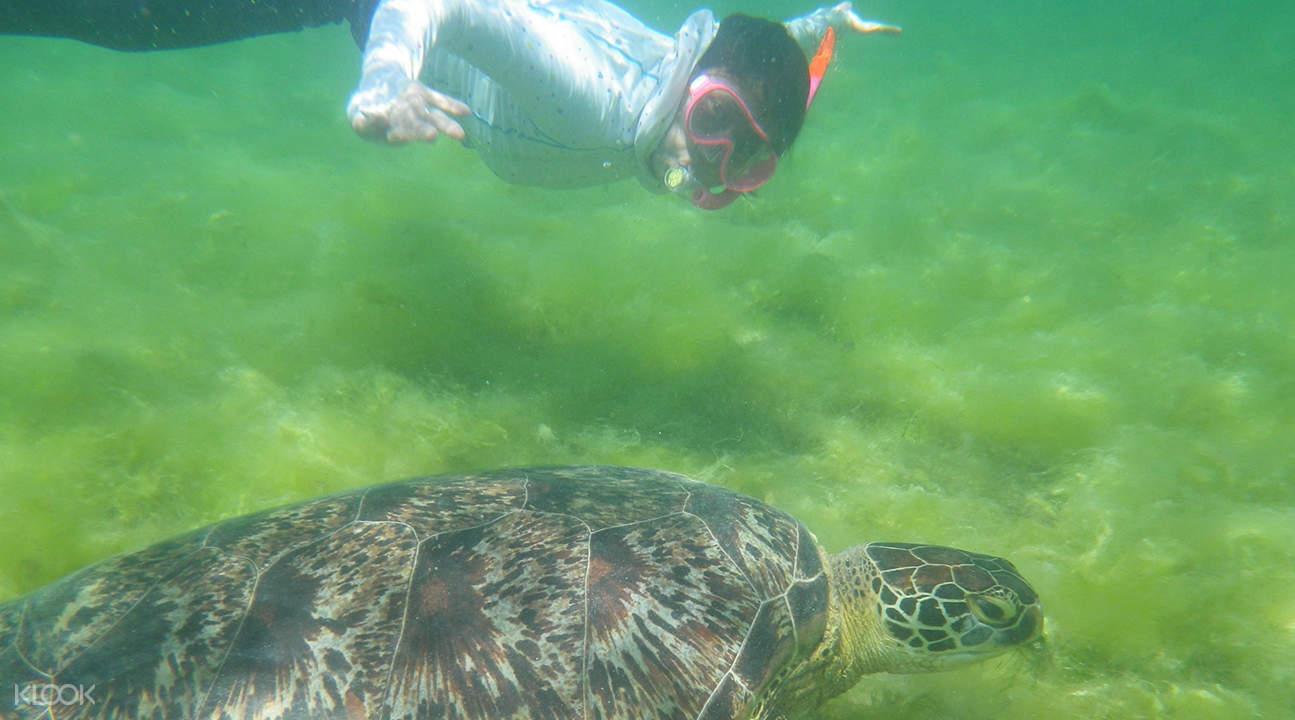 pescador island snorkeling rates