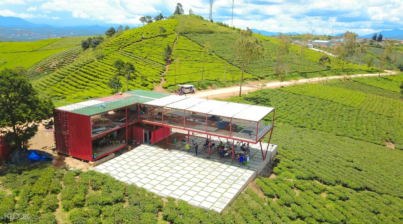 cau dat tea plantation da lat