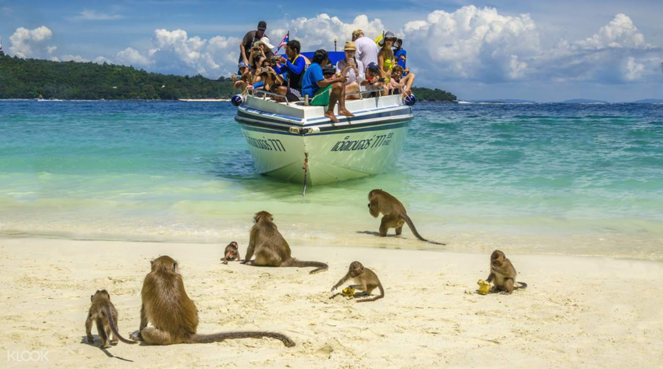 maya bay speedboat tour tickets, monkey island tour, speedboat to maya bay phi phi island