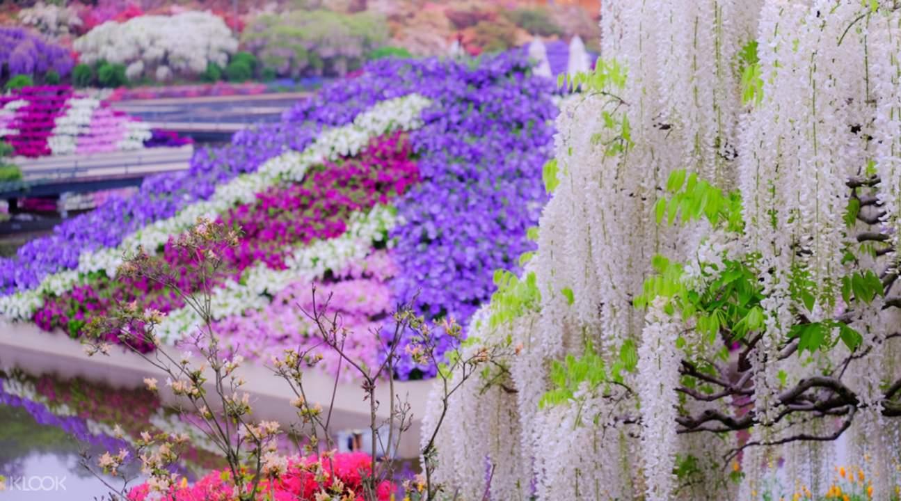 足利花卉公园赏花