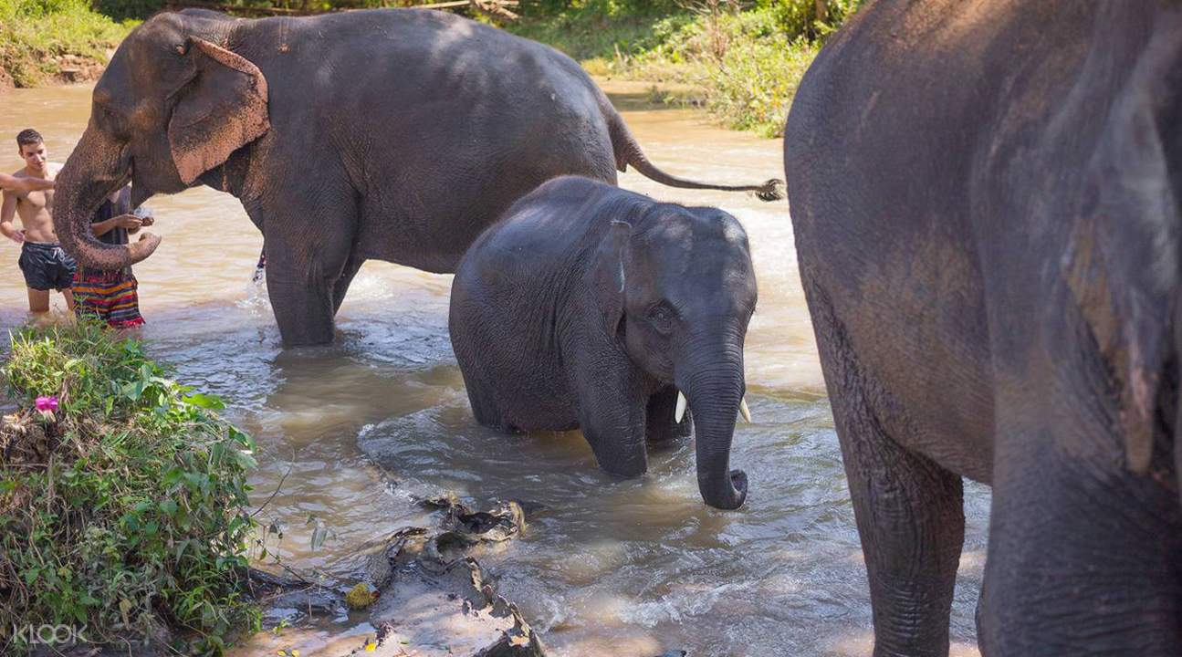thong elephant sanctuary day tour chiang mai thailand