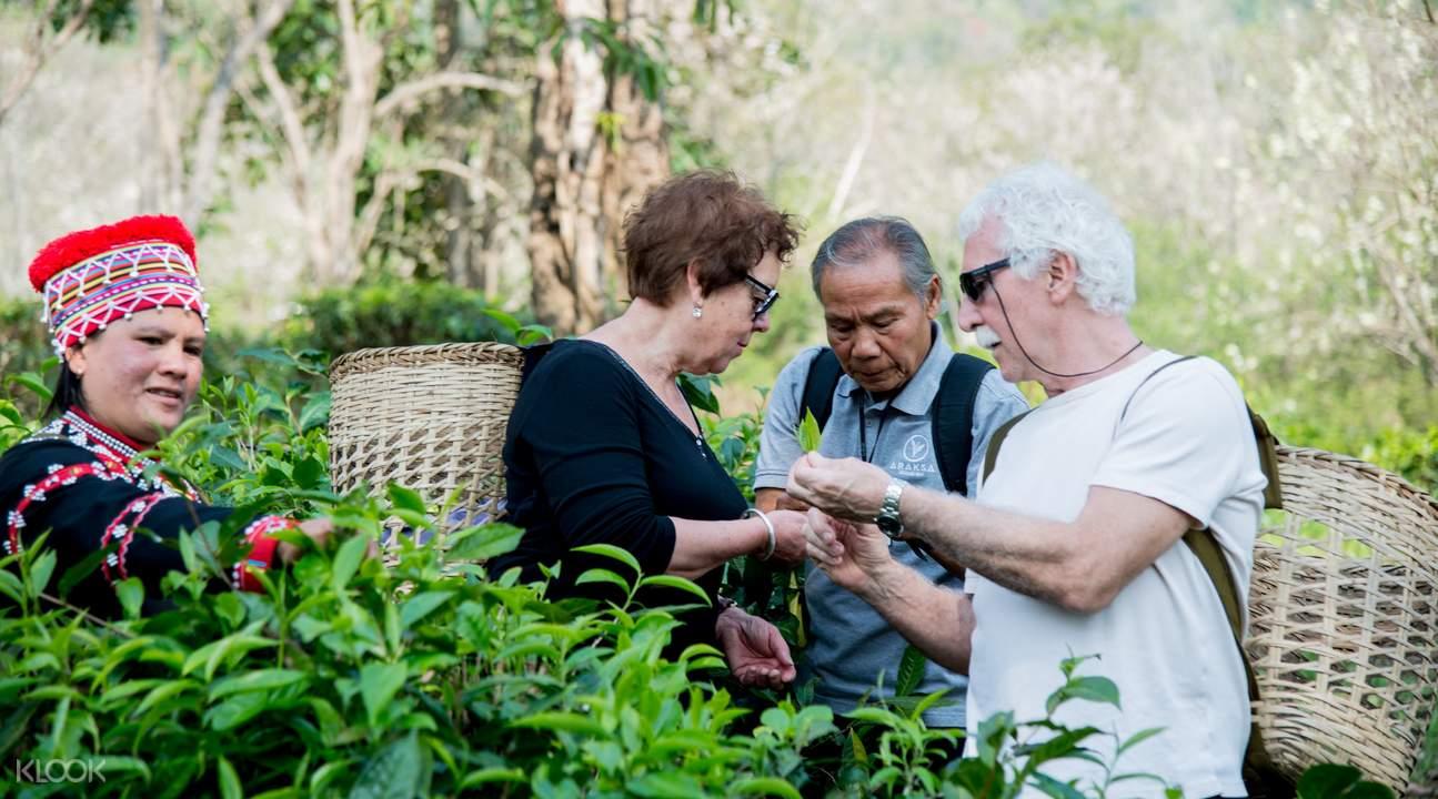 araksa tea garden tour