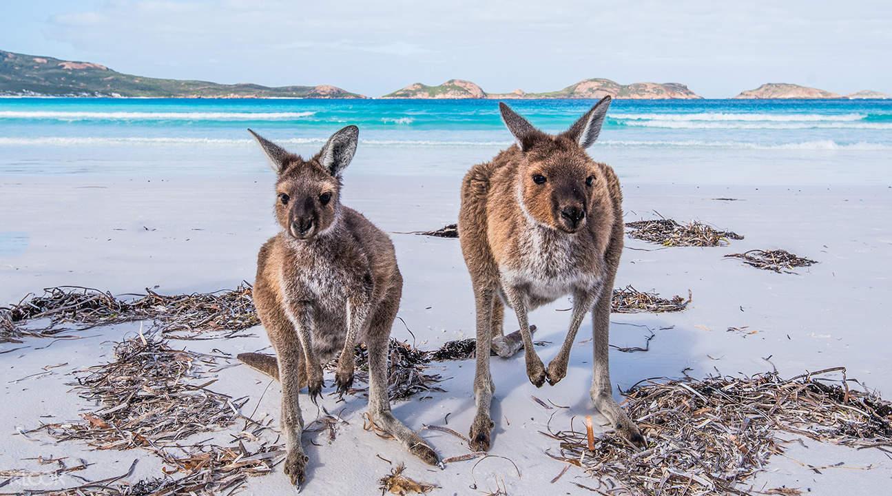 袋鼠岛两日游