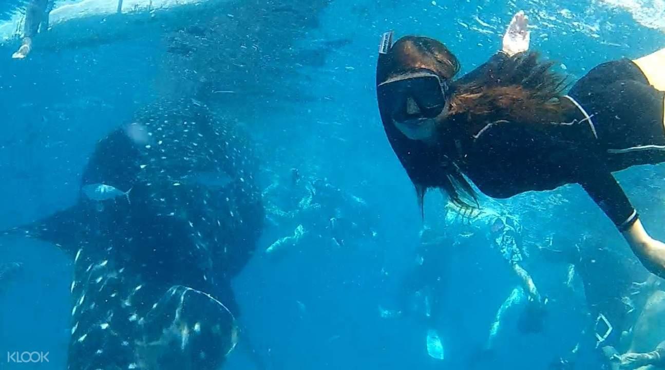 奧斯洛鯨鯊共遊