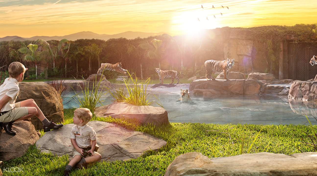 dreamworld tiger island
