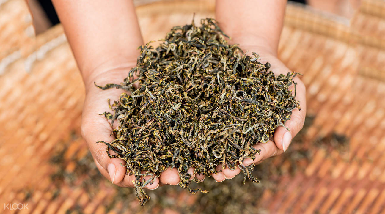 araksa tea garden tour thailand