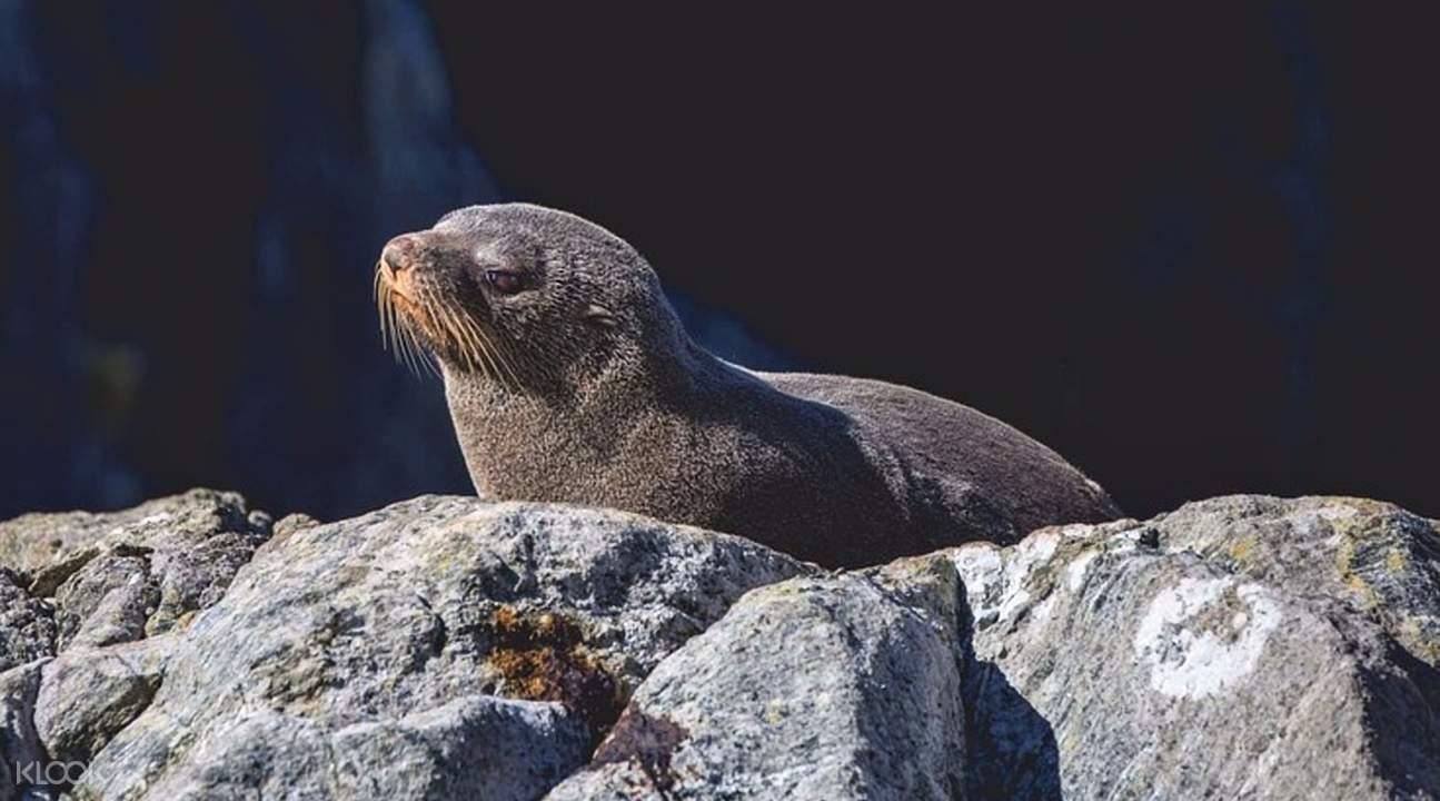 米爾福德峽灣遊船觀光