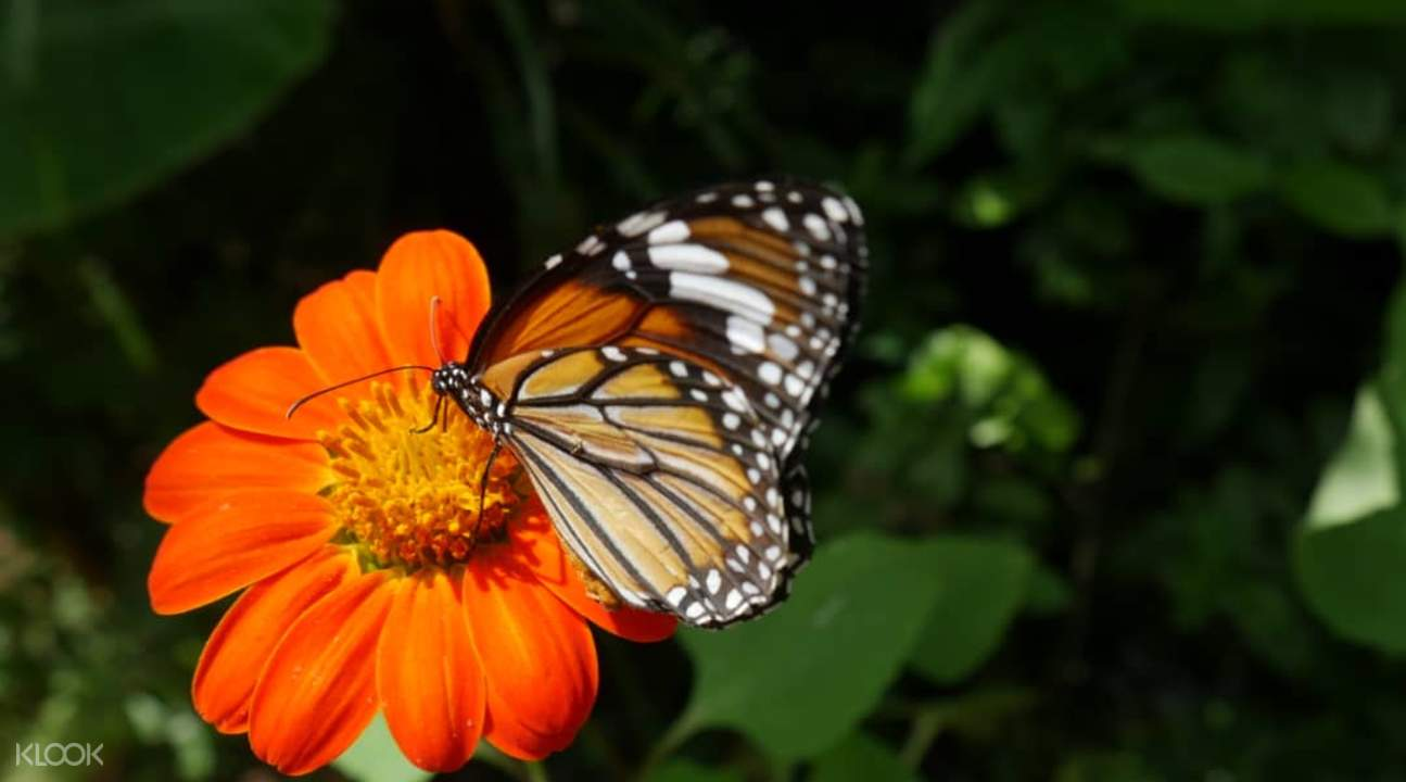 entopia butterfly park tickets