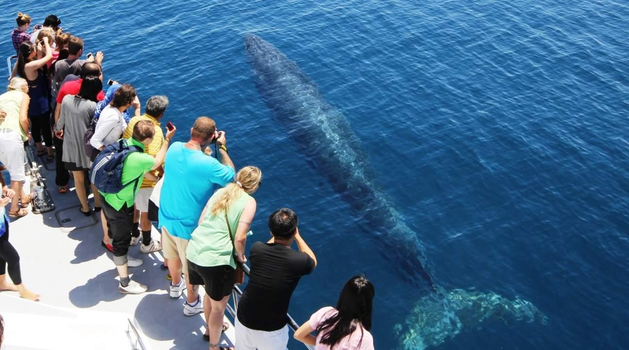 觀鯨觀海豚遊船之旅