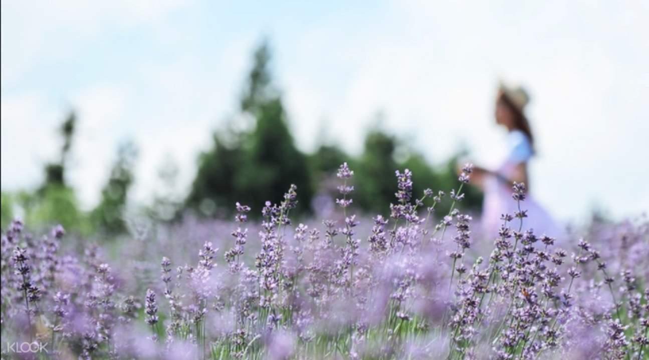 Boromwat 四季花園