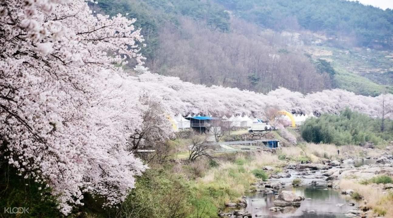 马耳山樱花庆典