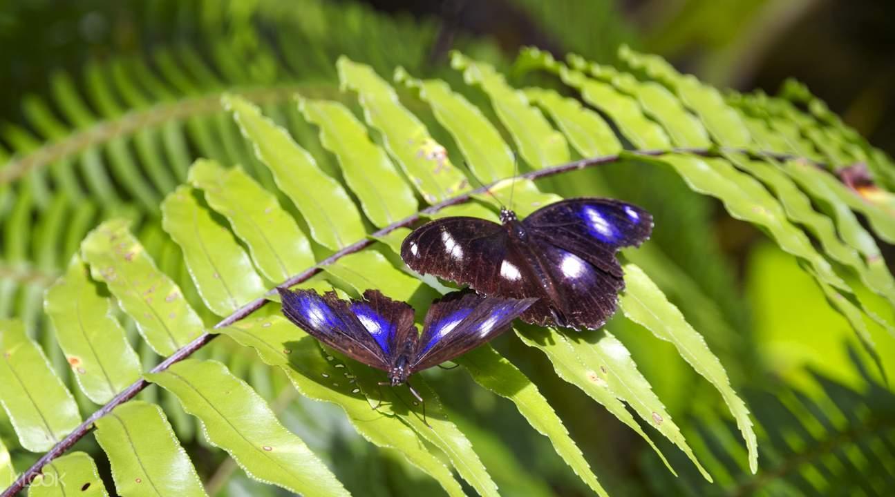 澳大利亞蝴蝶保護區門票