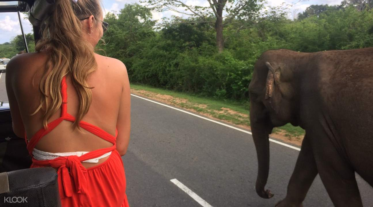 a woman riding an open car with an elephant at the side of the road at yala national park