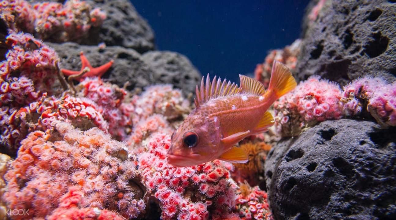 加州科学院珊瑚