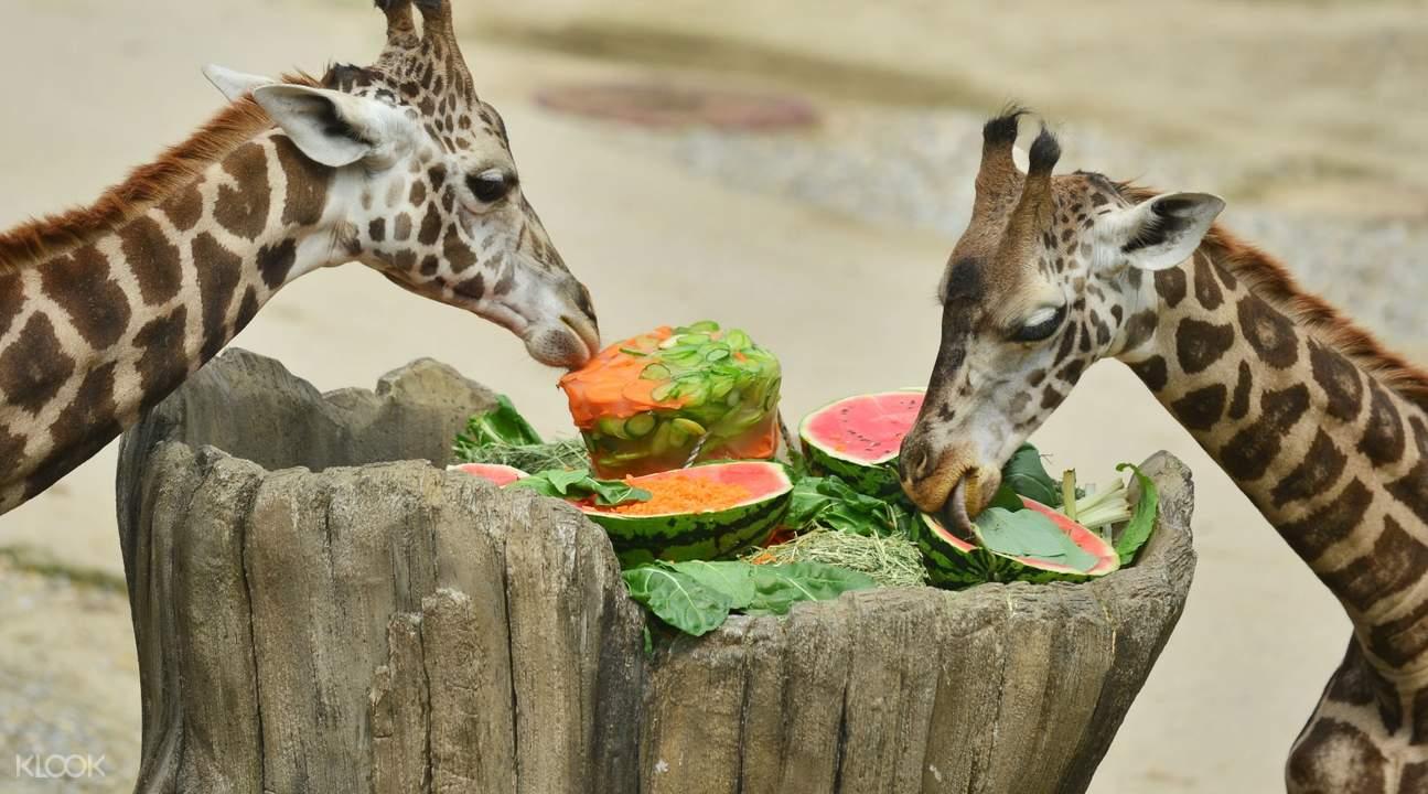safari world everland gift voucher seoul south korea
