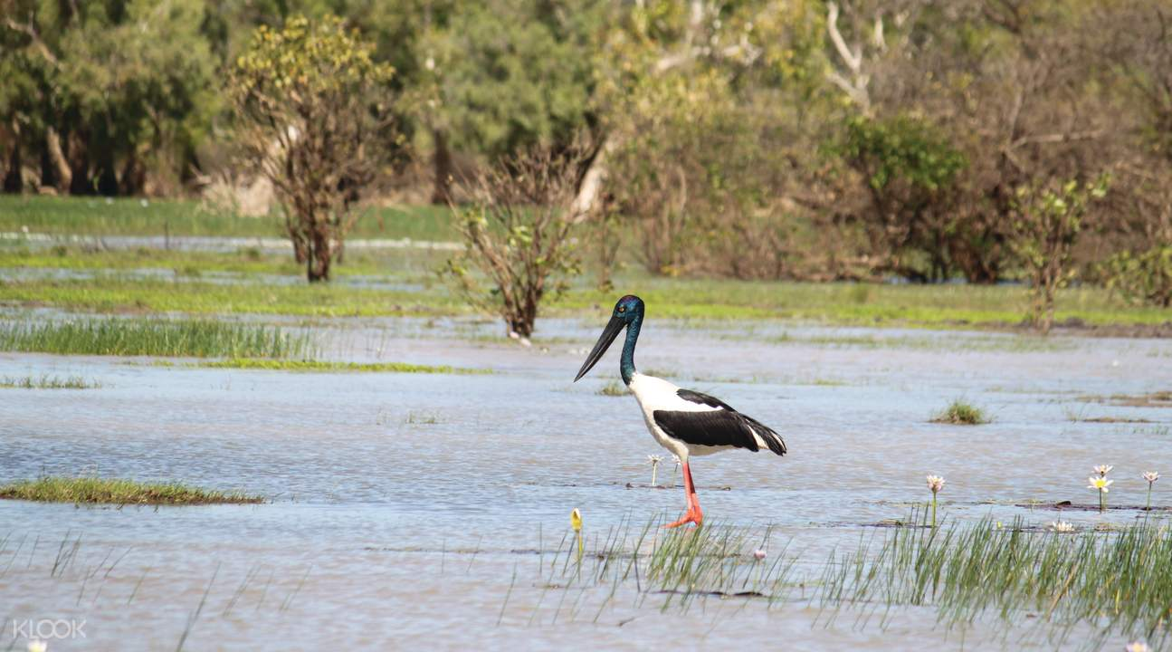 玛丽河湿地物种