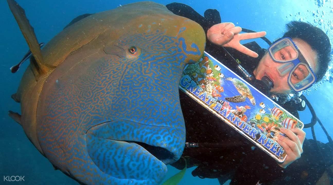 凱恩斯大堡礁,凱恩斯大冒險號