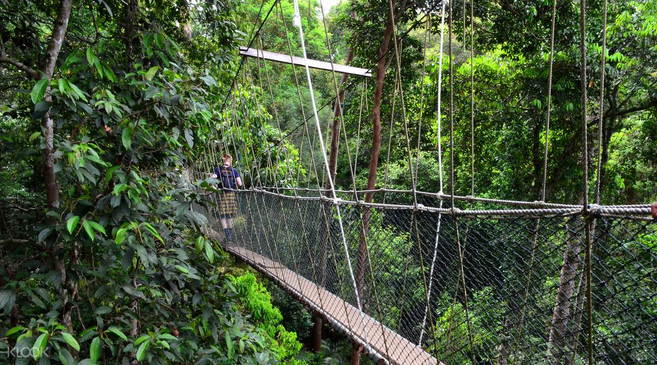 Taman Negara National Park Day Tour