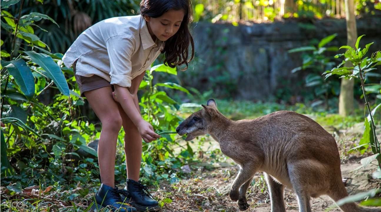 Bali Zoo Discount Tickets