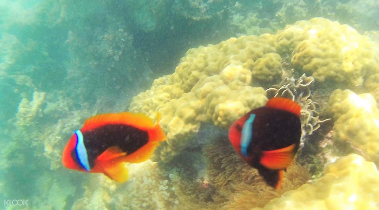 where to snorkel in bintan