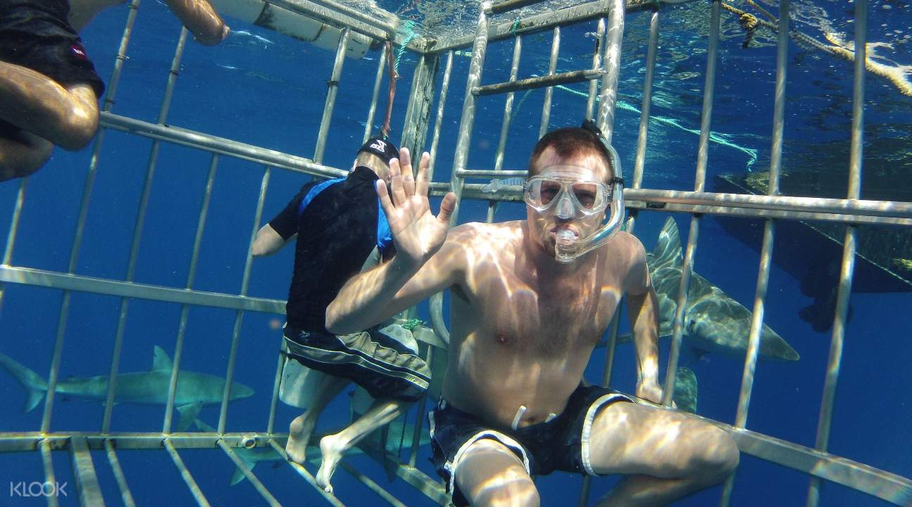 a man with goggles in snorkels underwater inside a shark cage