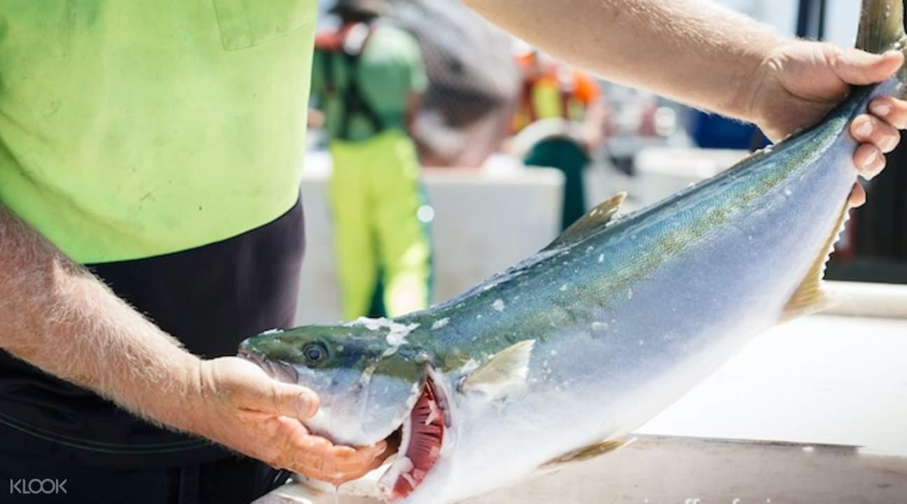 林肯港海鲜 & 野生动物体验之旅