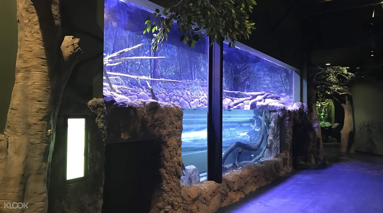 淡水龟栖息地