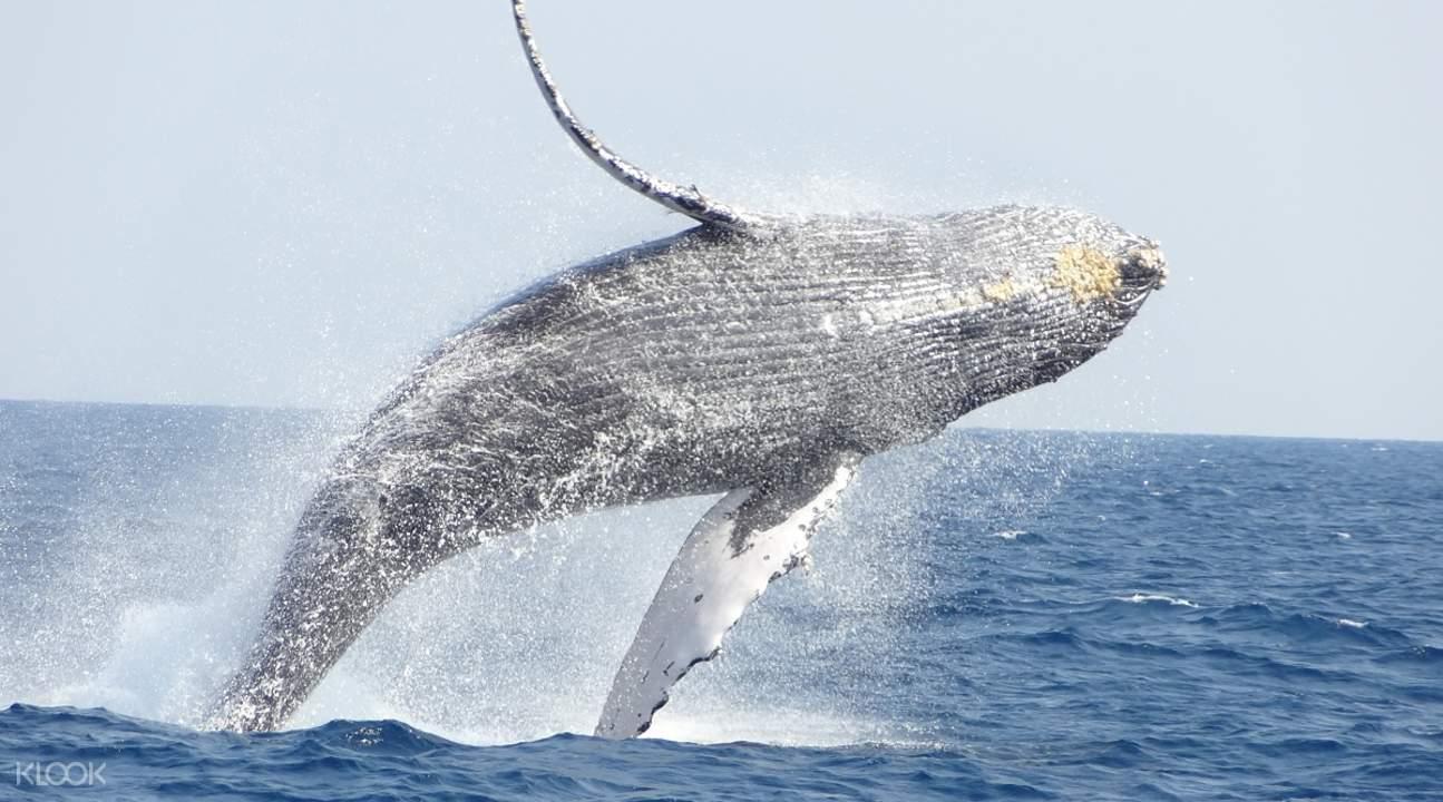 冲绳 那霸 赏鲸
