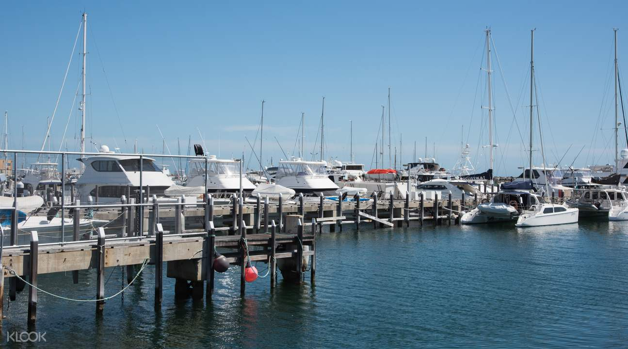 perth and rottnest island experience