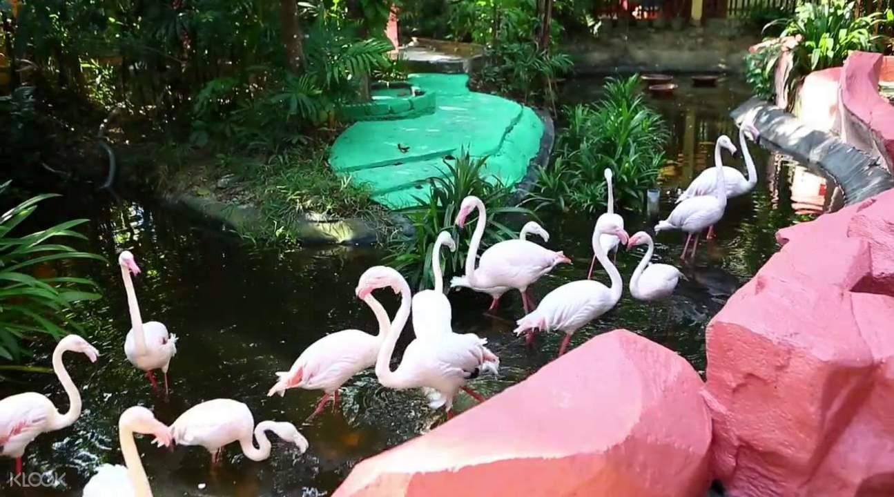 flamingos in langkawi underwater world