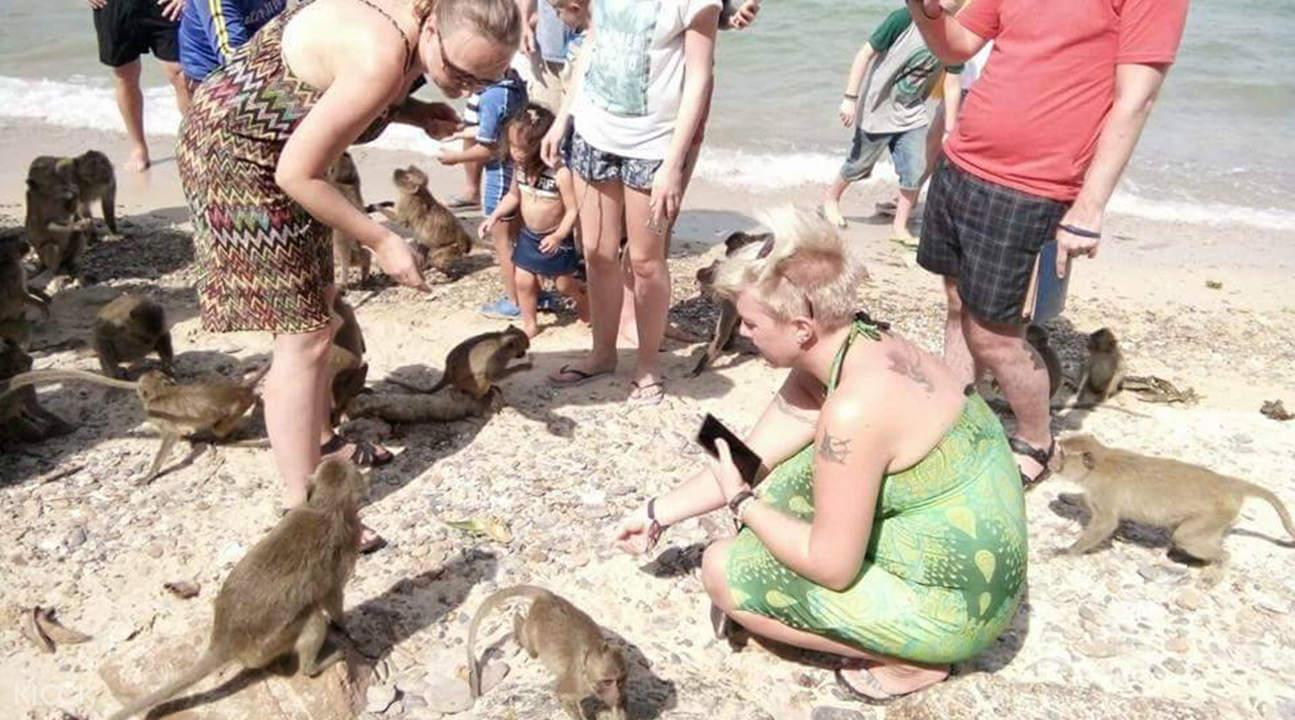 海豚灣 & 猴子島出海一日遊
