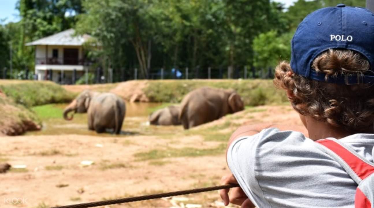 野生动物之友基金会大象看护体验