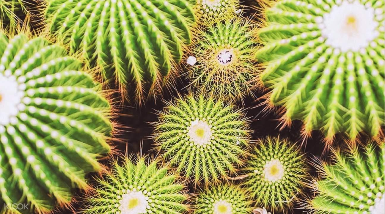 沙生植物園