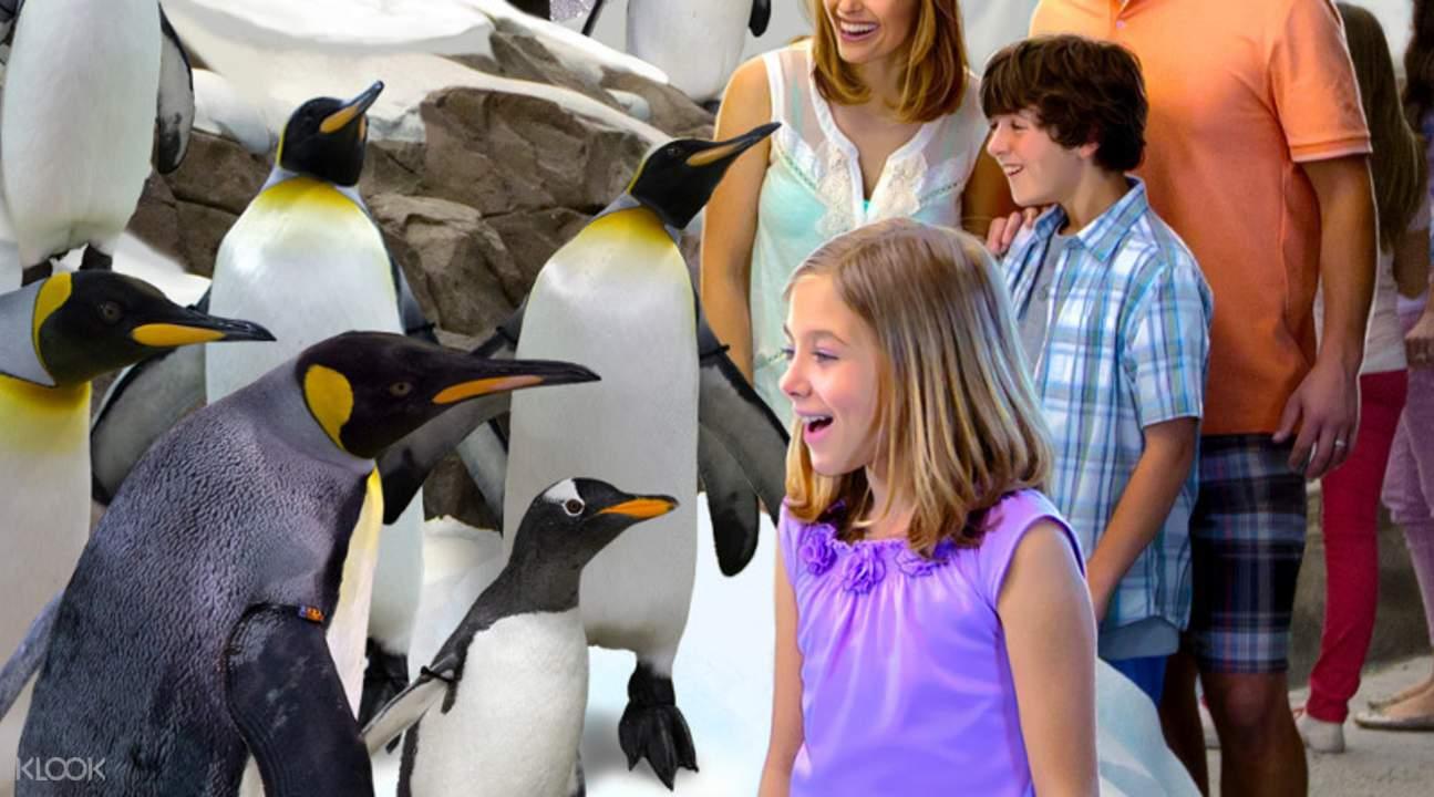 奥兰多海洋世界企鹅