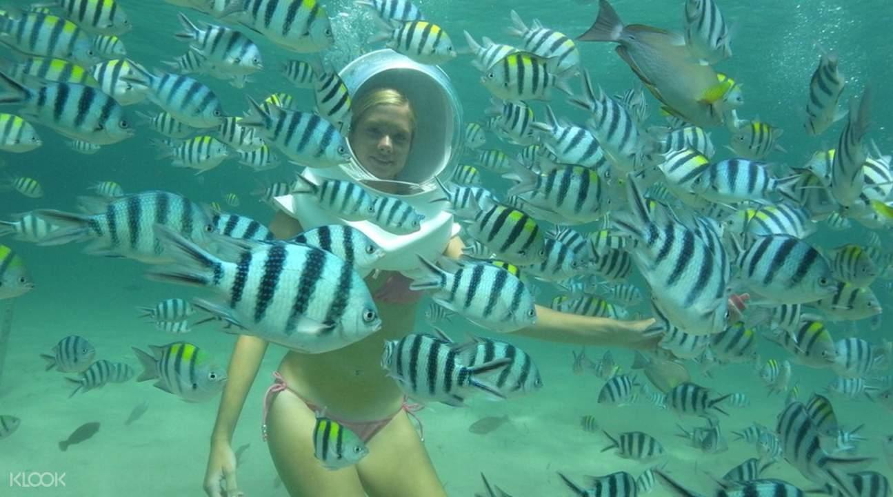 珊瑚島一日遊 海底漫遊