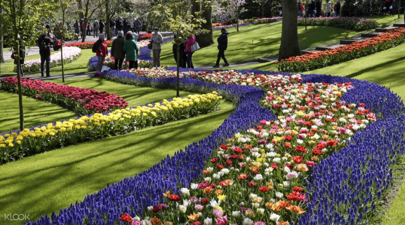 Best Tulip Tour In Amsterdam