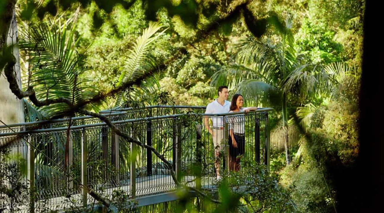 奥莱利斯亚热带雨林