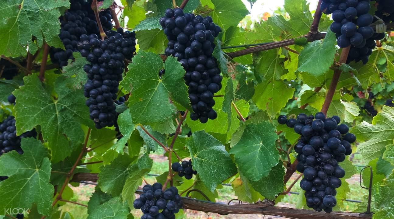 taste marlborough wine tour package