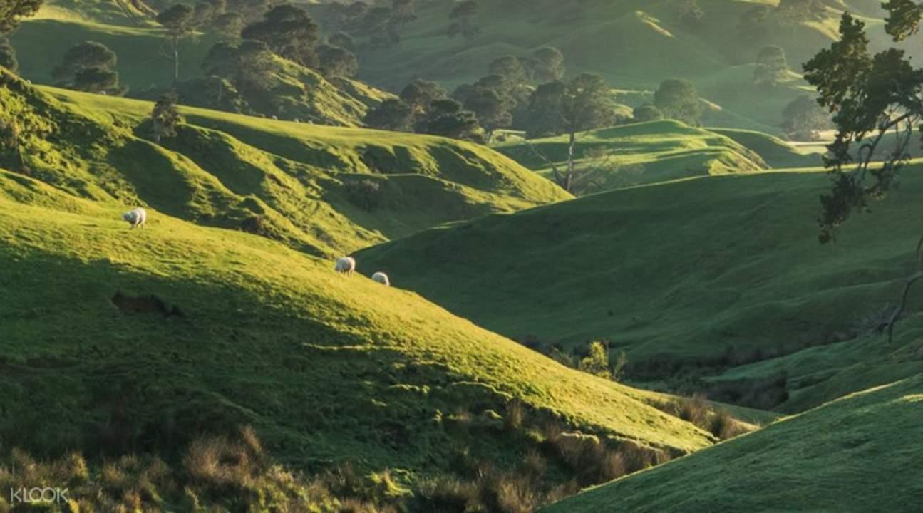 Hobbiton holes on a hill