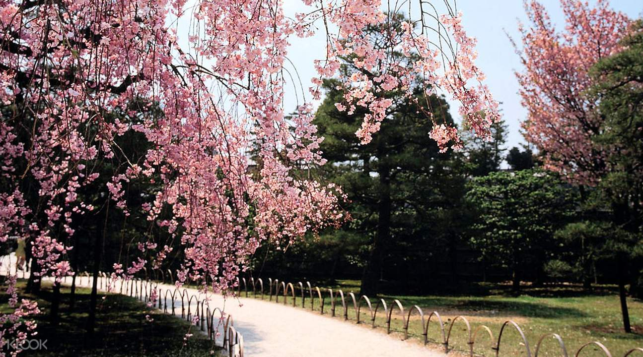 Trendsee Cherry Blossom Aulacese Park