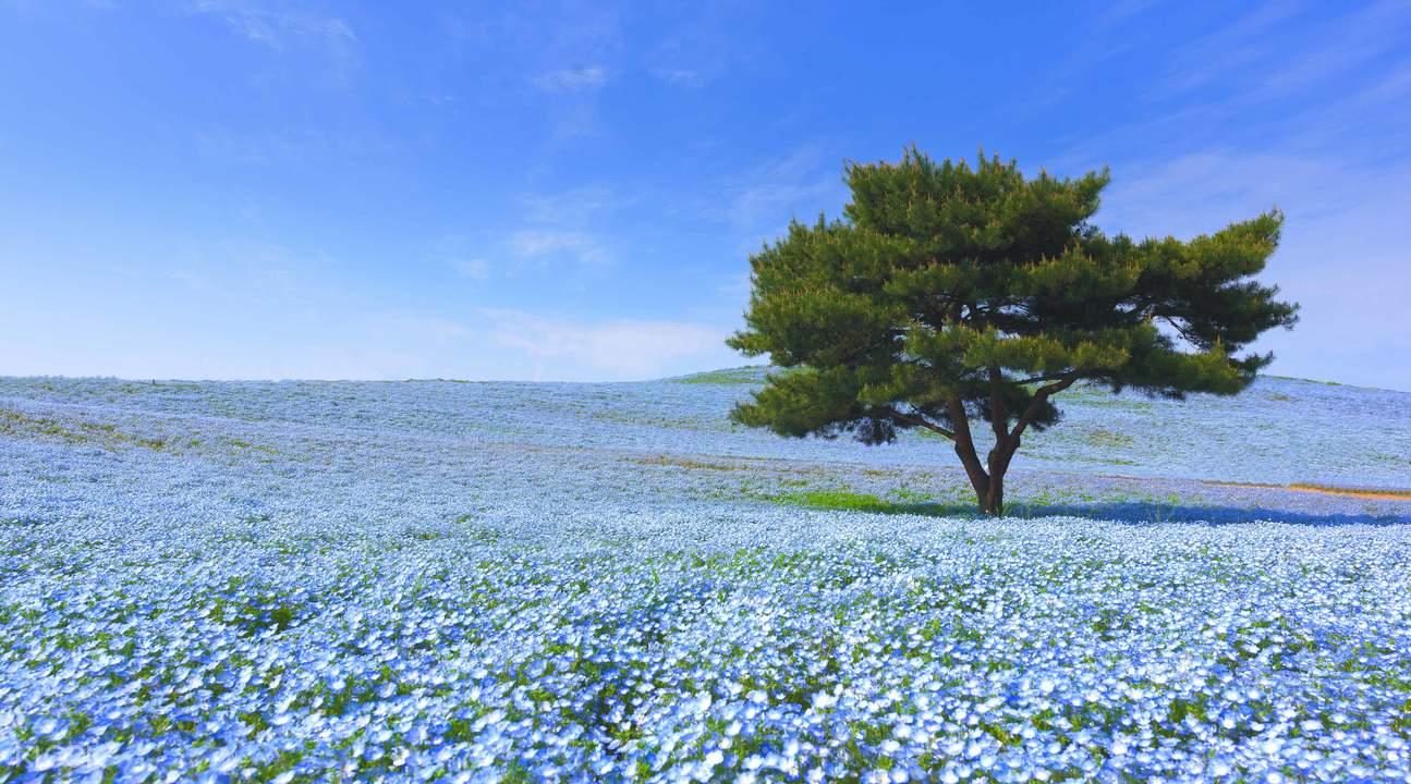 hitachi seaside park japan