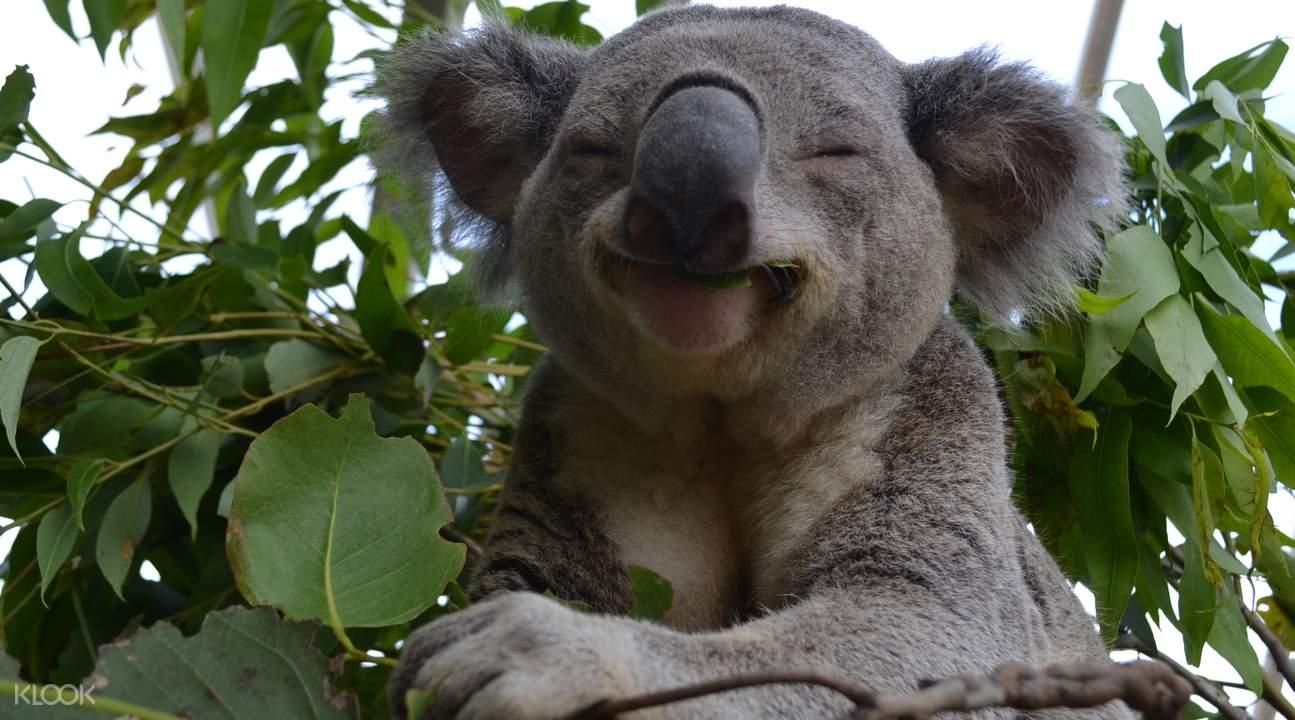 雪梨野生動物園