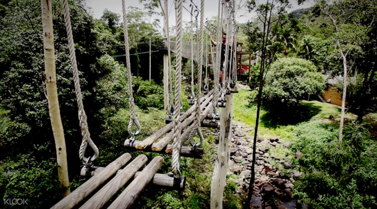 suspended bridge at treetop challenge