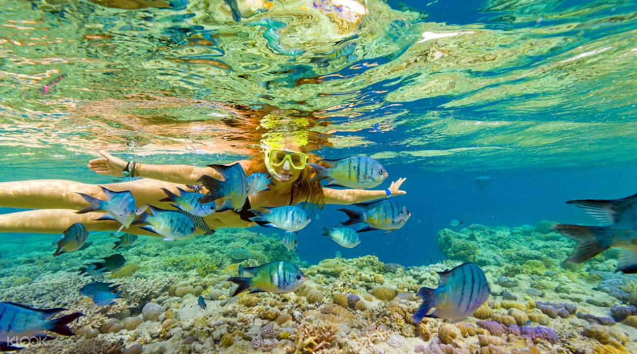 Great Barrier Reef Adventures by Cruise Whitsundays from Airlie Beach or  Hamilton Island